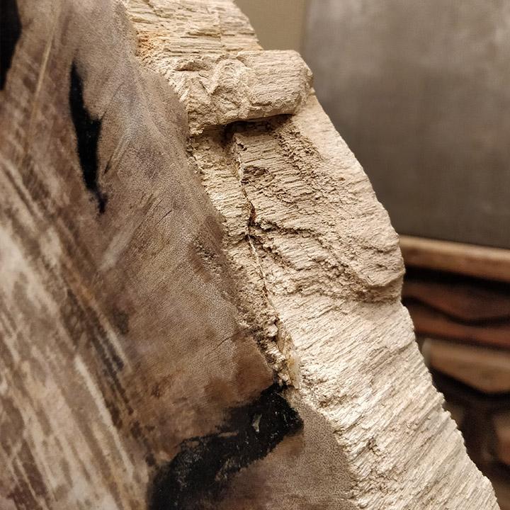 Coupe de bois pétrifié sur pied